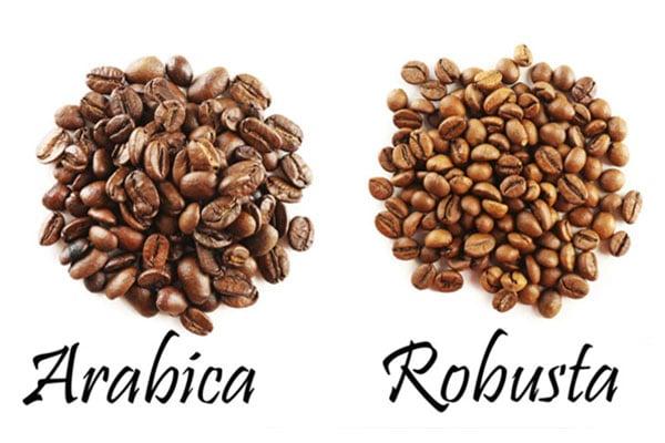 فرق قهوه ها چیست