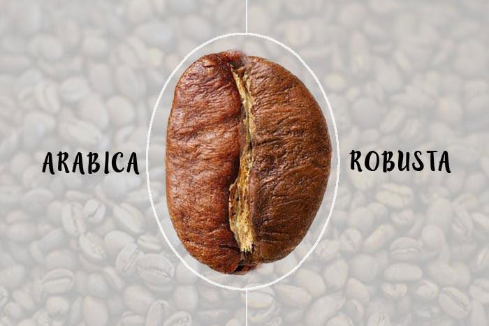 فرق انواع دانه های قهوه